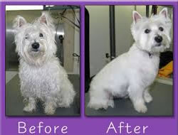 Dog Groomingin Long Beach